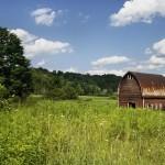 Urban Farming, Cara Teknologi Mendekatkan Kita pada Alam