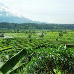 4 Startup yang Memanfaatkan Kekayaan Lokal Indonesia