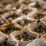 Growth Mindset: Pembeda Antara Cara Pikir Orang Sukses & Orang  Gagal